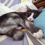 grey cat names , 6 Charming Persian Cat Names Female In Cat Category