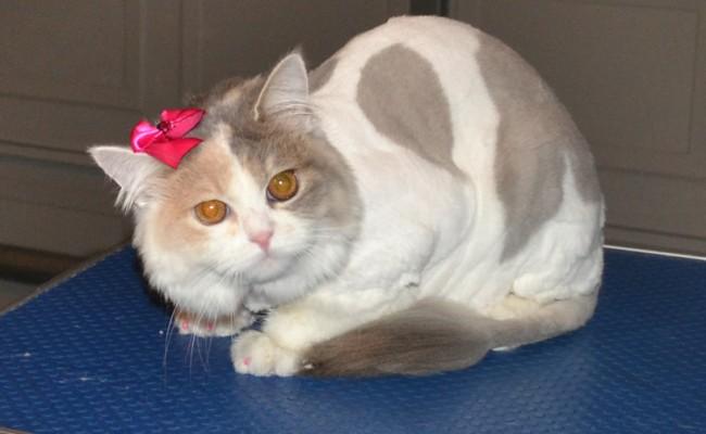 Dog , 7 Good Persian Cat Grooming : Grooming Pet