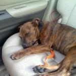 maltese puppies , 6 Cute Pound Puppy Rescue Palo Alto In Dog Category
