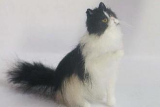 Miniature Persian Cat , 6 Cute Mini Persian Cats In Cat Category