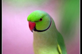 parakeet in Plants