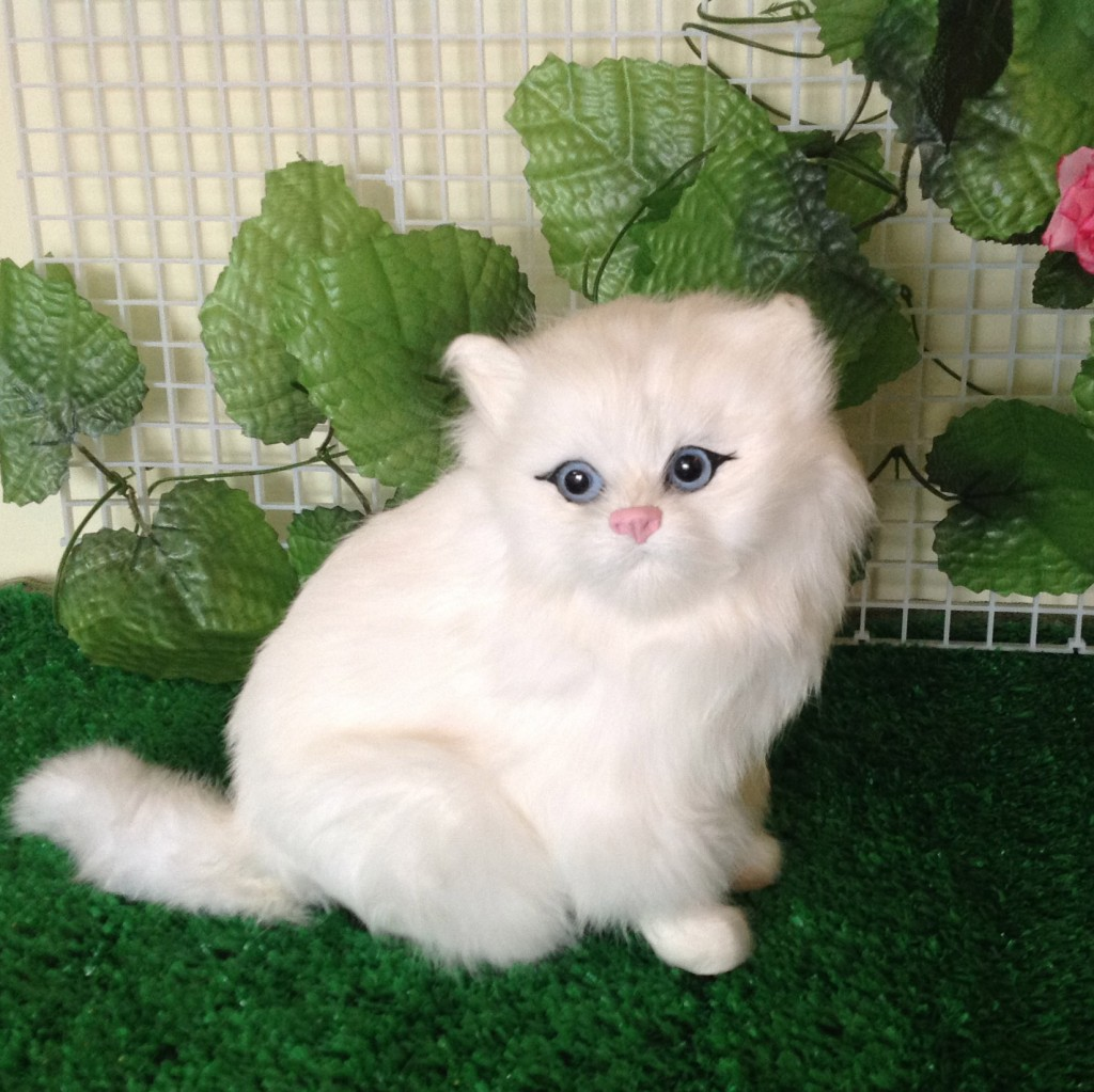 persian cat cartoon