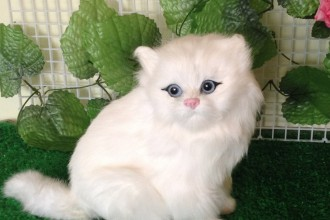 persian cat cartoon in Forest