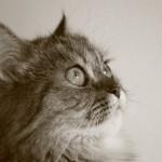 persian cat hereditary health , 9 Cute Persian Cat Health Issues In Cat Category