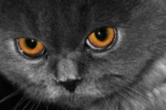 Persian Kitten , 9 Lovely Persian Cat Eye Problems In Cat Category
