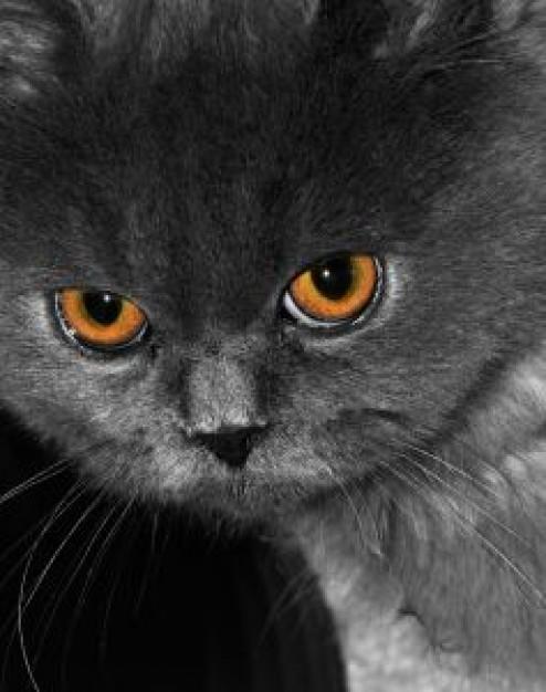 Cat , 9 Lovely Persian Cat Eye Problems : Persian Kitten