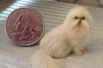 Cat , 7 Cute Miniature Persian Cat : persian shorthair cat