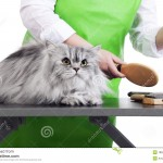 pet grooming , 6Good Persian Cat Grooming Tools In Cat Category