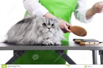 Pet Grooming , 6Good Persian Cat Grooming Tools In Cat Category
