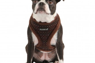 Dog , 7 Cute Yuppy Puppy Harness : puppia love