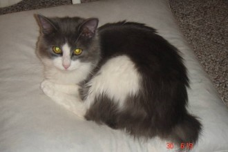 Siamese Cats , 9 Charming Persian Cat Rescue San Diego In Cat Category