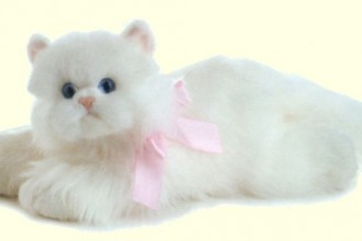 white persian cats in Butterfly