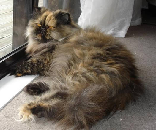 Year Old Tortoiseshell Biological Science Picture
