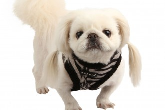 Yuppie Harness , 7 Cute Yuppy Puppy Harness In Dog Category