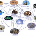 Desert Food Chain Picture , Desert Food Chain Pictures In Ecosystem Category