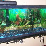 Future Plans , 8 Wonderful Koi Fish Tanks In pisces Category