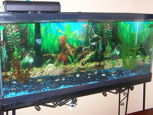 pisces , 8 Wonderful Koi Fish Tanks : Future Plans