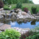 Koi Fish , 6 Charming Koi Fish Pond Care In pisces Category