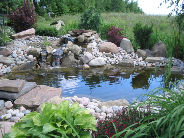 pisces , 6 Charming Koi Fish Pond Care : Koi Fish