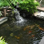Koi Fish Home , 6 Top Buying Koi Fish In pisces Category
