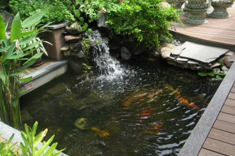 Koi Fish Home in Plants