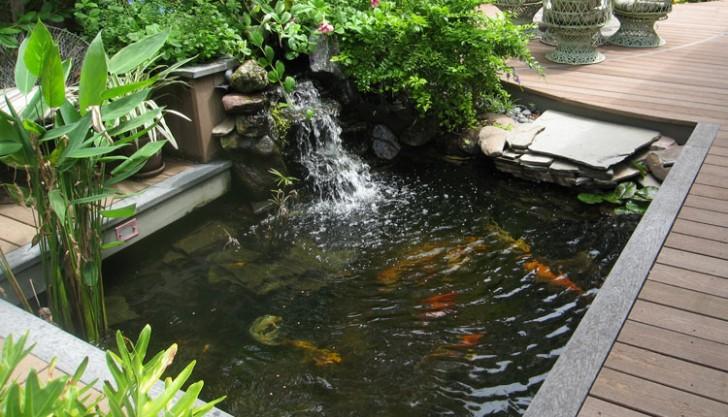pisces , 6 Top Buying Koi Fish : Koi Fish Home