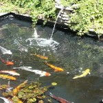 Koi Fish Pond Design , 7 Fabulous Koi Fish Fountain In pisces Category