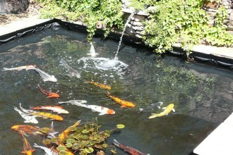 Koi Fish Pond Design in Plants