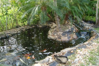 Koi Fish Ponds , 7 Fabulous Koi Fish Ponds Made Easy In pisces Category