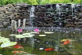 Koi Fish Ponds , 6 Good Pictures Of Koi Fish Ponds In pisces Category