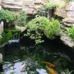 Koi Pond Construction , 5 Good Koi Fish Pond Construction In pisces Category
