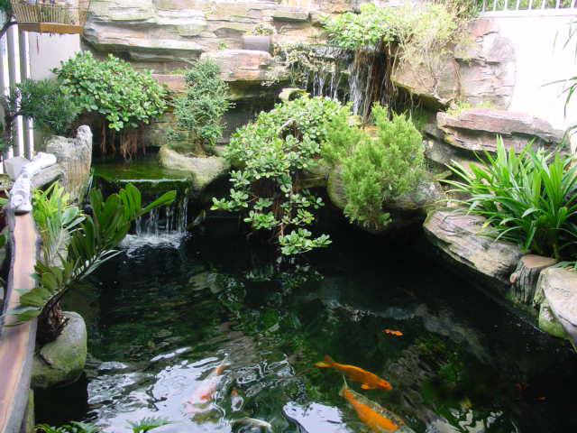 Koi pond construction biological science picture for Fish pond construction and design