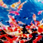 Koi fish price range , 7 Fabulous Koi Fish Cost In pisces Category
