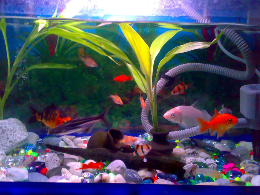 Koi fish tank size 8 wonderful koi fish tanks for Koi fish size