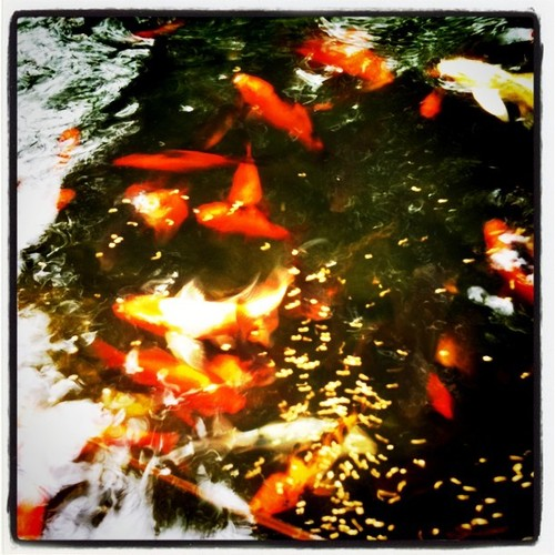 pisces , 8 Nice Koi Fish Pricing :  Best Koi Fish
