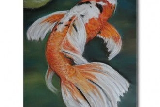 butterfly koi in Dog