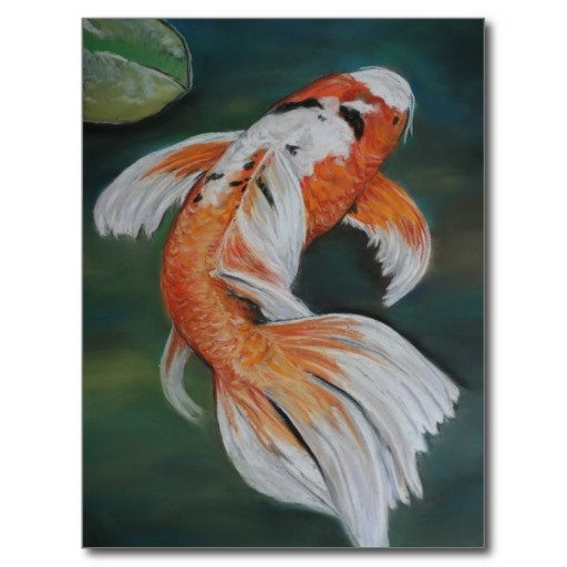 pisces , 6 Lovely Koi Butterfly Fish : Butterfly Koi