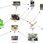 desert food web pictures , Desert Food Chain Pictures In Ecosystem Category