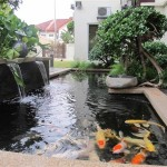 fish pond design , 8 Charming Koi Fish Ponds Designs In pisces Category