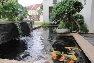 fish pond design in Plants