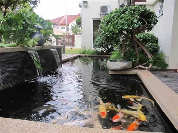 pisces , 8 Charming Koi Fish Ponds Designs : Fish Pond Design