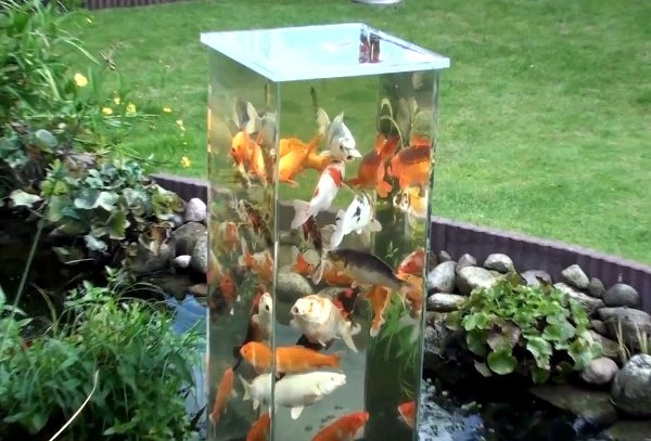 pisces , 7 Fabulous Koi Fish Ponds Made Easy :  Fish Ponds