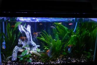 Koi Angel Tank , 8 Wonderful Koi Fish Tanks In pisces Category