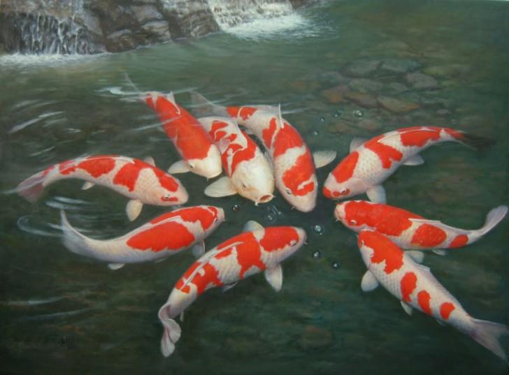 pisces , 6 Charming Koi Fish In Las Vegas : Koi Aquarium Fish