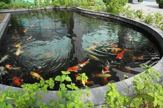 koi farm in Birds