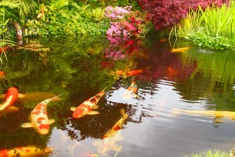 Koi Fish Pictures , 7 Fabulous Koi Fish Fountain In pisces Category