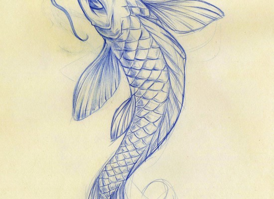 8 good koi fish drawings in pisces biological science for Koi fish sketch
