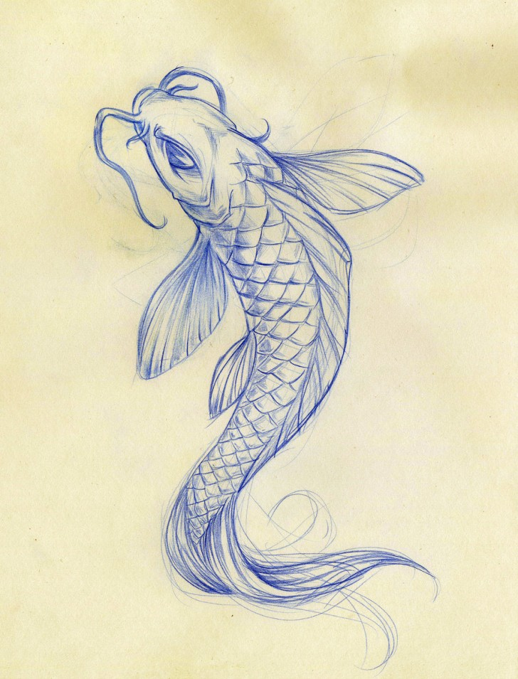 pisces , 8 Good Koi Fish Drawings : Koi Fish Sketch