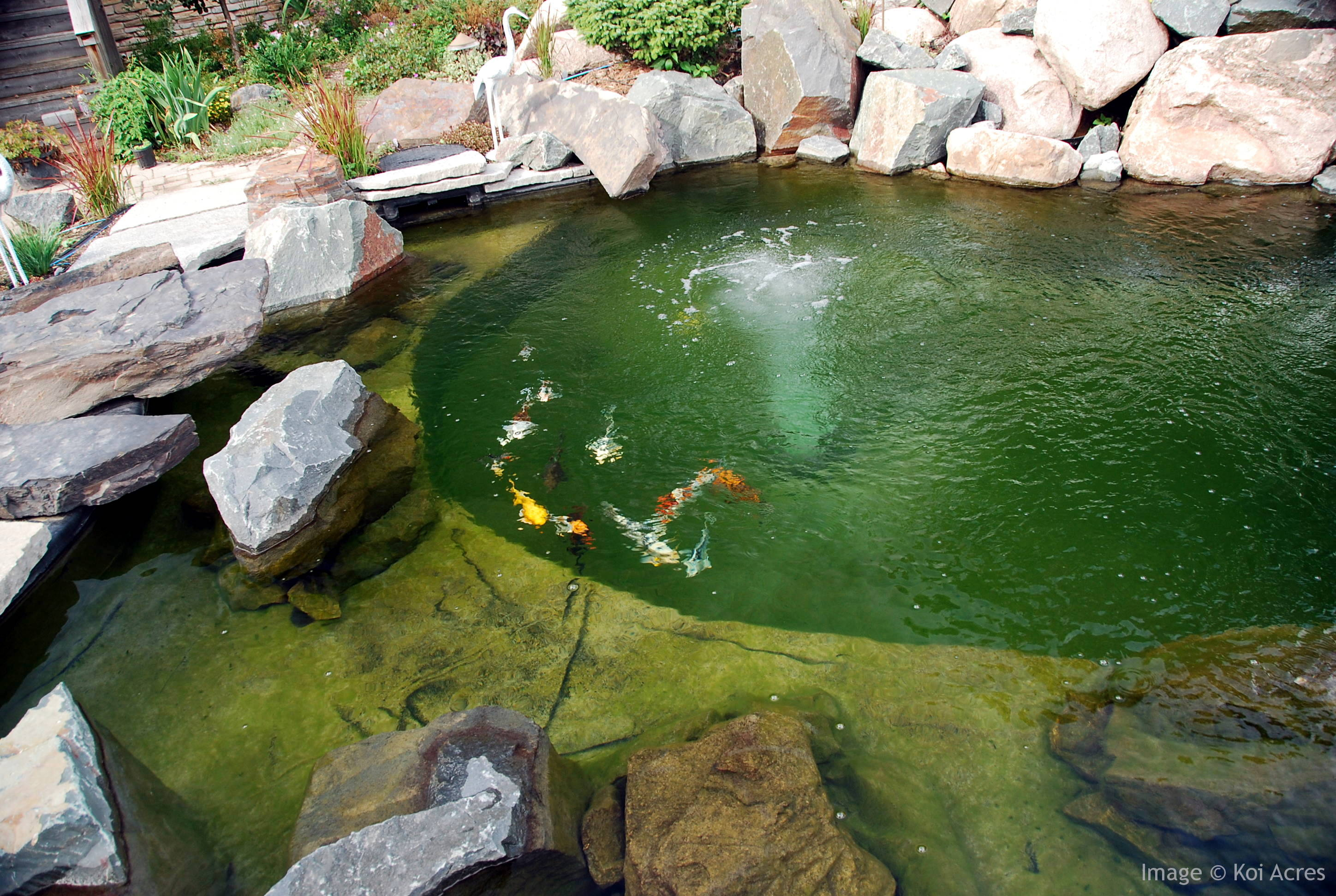 Koi fishing 6 charming koi fish pond care biological for Fish pond filtration