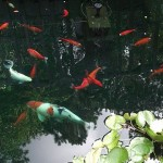 koi pond , 7 Fabulous Koi Fish Fountain In pisces Category